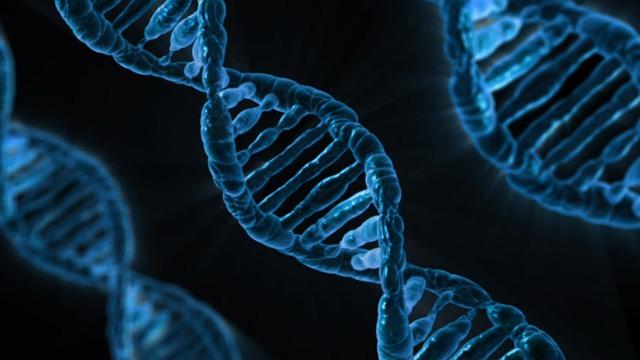自分の肥満遺伝子タイプを知る方法は?